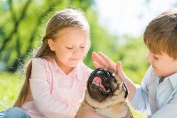 תושב חוזר – יבוא חיות<br> Toshav Hozer – pets import