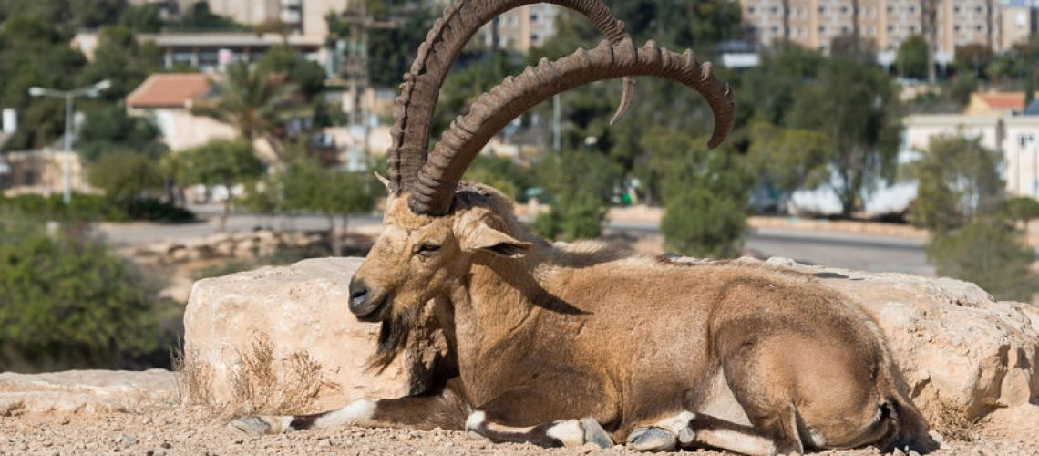 Visit to Mitzpe Ramon in Southern Israel